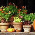 Marigolds And Pumpkins by Susan Savad
