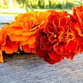 Marigolds by Nancy Wagener