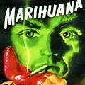 Marihuana by Dominic Piperata