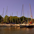 Marina At Lake Murray S C by Lisa Wooten