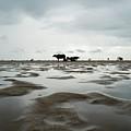 Marina Beach, Chennai by Vasanth Kumar