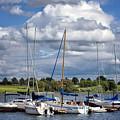 Marina - Branched Oak Lake by Nikolyn McDonald