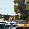 Marina Views by Elaine Plesser