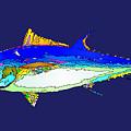 Marine Life by Rafael Salazar