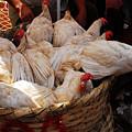 Market Chickens  Grenada Nicaragua by Dan Albright