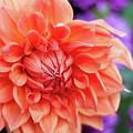 Market Flowers  by Anna Friedrichs