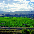 Marlborough Wine Country by Kevin Smith