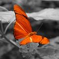 Marmalade Delight Colorized by David Dunham