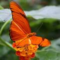 Marmalade Delight by David Dunham
