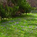 Marmalade Spring Haiga by Judi and Don Hall