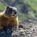 Marmot On The Ridge by Rob Lantz