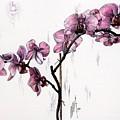 Marning Orchids by Inga Vereshchagina