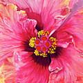 Maron's Hibiscus by Bibzie Priori
