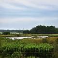 Marsh 8290 by Captain Debbie Ritter