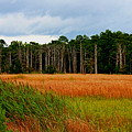 Marsh And Trees by Rand Wall