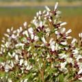 Marsh Blooms by Belinda Jane