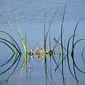 Marsh Design by Rosalie Scanlon