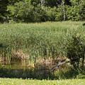 Marsh Grass by William Tasker