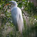 Marsh Heron by Dale Powell