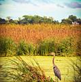 Marsh Heron by Stacey Rosebrock