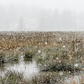 Marsh In A Snowstorm by Robert Potts