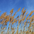 Marsh In The Wind by Skip Willits