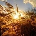Marsh Sunset by Vicki Spindler
