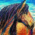 Marsh Tacky Wild Horse by Patricia L Davidson
