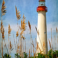 Marsh View Of Cape May Lighthouse by Carolyn Derstine