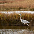Marsh Wader by Ann Keisling
