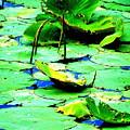 Marsh Waterlilies by Beth Akerman