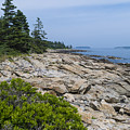 Marshall Ledge Looking Downeast by Patrick Fennell