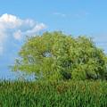 Marshland by Ann Horn