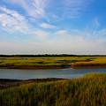 Marshland Charleston South Carolina by Susanne Van Hulst