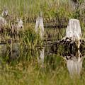 Marshland Reflections by Tina B Hamilton