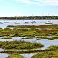 Marshlands by Ally Flowers