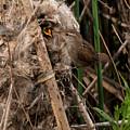 Marshy Nest by Damon Calderwood