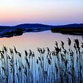 Marshy Twilight by Hanni Stoklosa