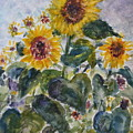 Martha's Sunflowers by Quin Sweetman