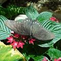 Marvelous Moth by Christine Doyle