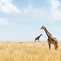Masai Giraffe In Kenya Plains by Susan Schmitz