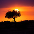 Masai Mara Sunrise by David Morefield
