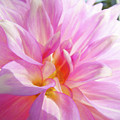 Master Gardeners Pink Dahlias Art Prints Baslee Troutman by Baslee Troutman