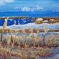 Matagorda Island Texas by Susan Michutka