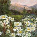 Matilija Poppies by Carolyn Paterson