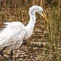 Mating Season - Everglades by J Darrell Hutto