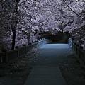 Matthiessen State Park Bridge False Color Infrared No 2 by Alan Look