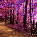 Matthiessen State Park Trail False Color Infrared No 2 by Alan Look
