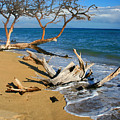 Maui Beach Dirftwood Fine Art Photography Print by James BO  Insogna