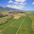 Maui Farmland by Ron Dahlquist - Printscapes